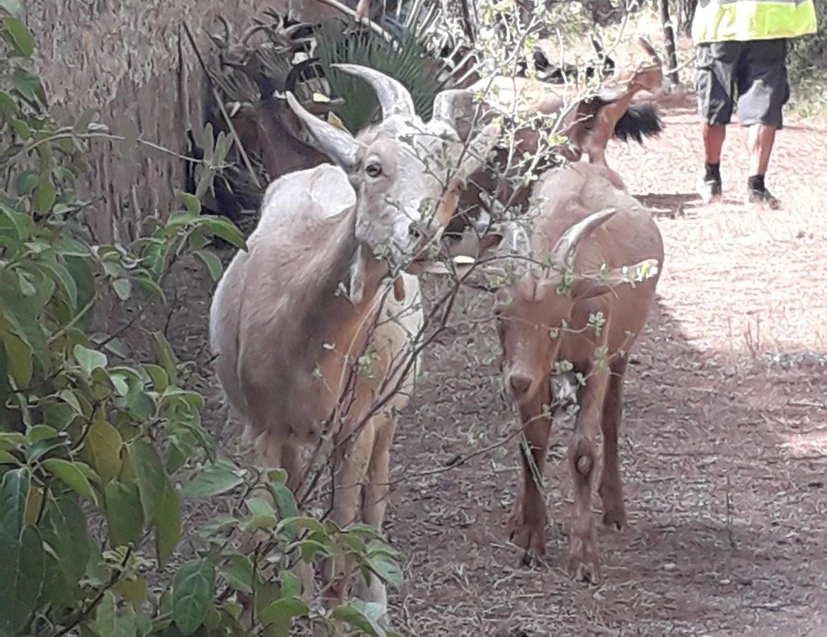 Initiative soutenue par Esprit Parc national Port-Cros - L'asso explore et préserve